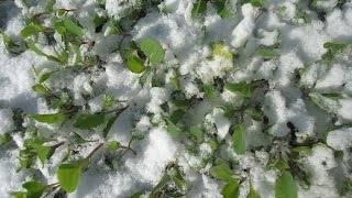 Какую температуру может выдержать капуста весной и осенью