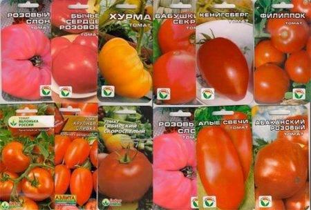 Устойчивые к фитофторе сорта томатов