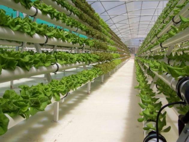 Зелень своими руками: применение гидропонной установки для выращивания лука, петрушки, салата в домашних условиях