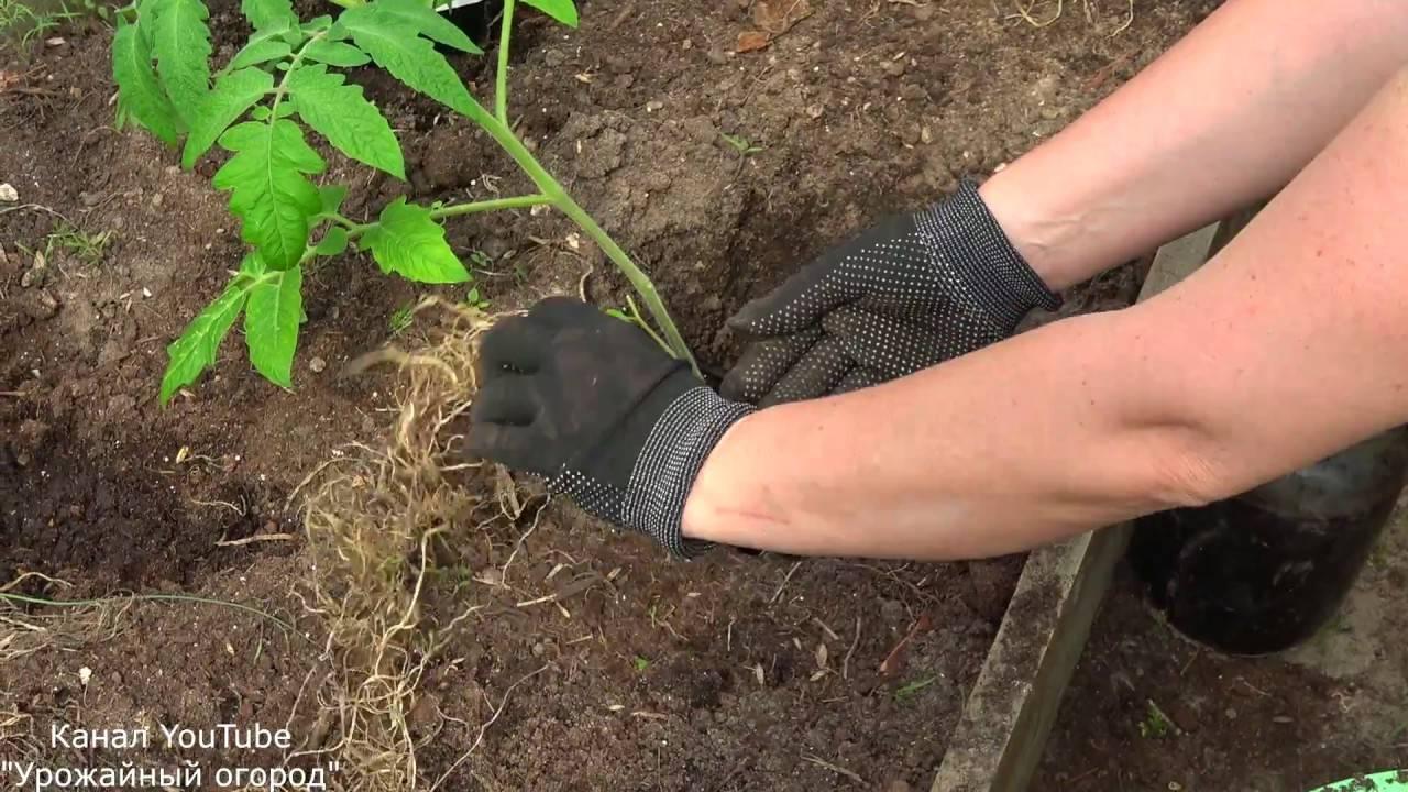 Что сыпать в лунку при посадке помидоров для большей урожайности?