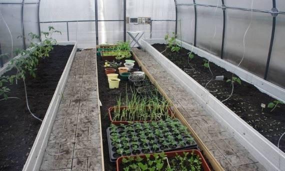 Что посадить рядом с помидорами: с чем можно сажать помидоры в открытом грунте