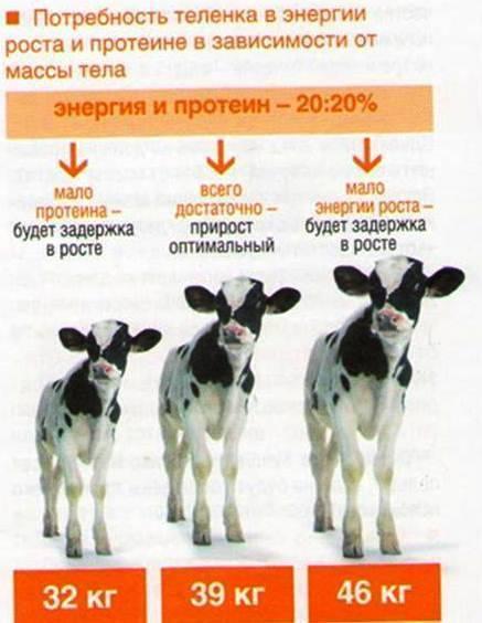 """Добавки для роста телятам: наиболее эффективные и полезные ао """"витасоль"""""""