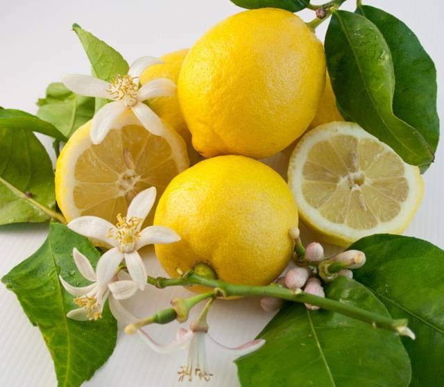 Лимон при беременности | чай с лимоном, вода с лимоном, мед с лимоном | лимон при простуде лимон при беременности | чай с лимоном, вода с лимоном, мед с лимоном | лимон при простуде