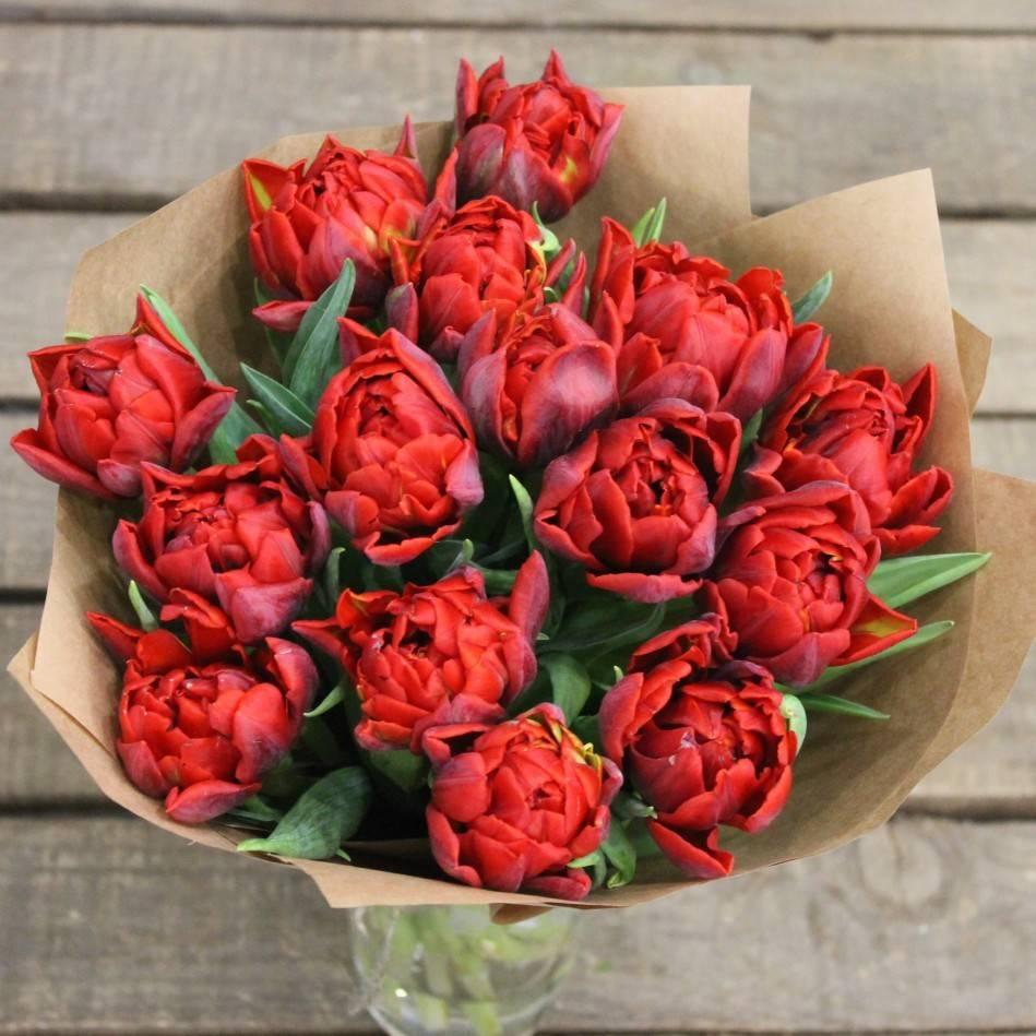 Пионовидные тюльпаны: фото, сорта, описание, выращивание