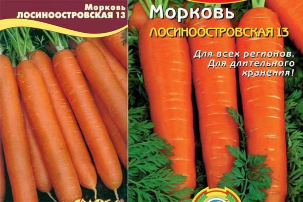 Морковь лосиноостровская: описание, фото, отзывы