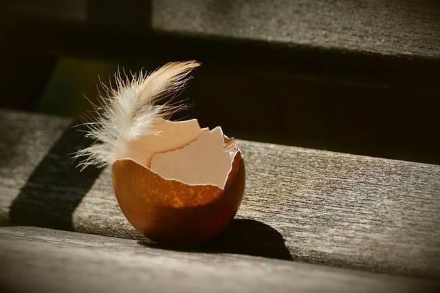 Что делать если у куриных яиц истончилась и ослабла скорлупа