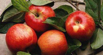 Яблоня белый налив: описание, особенности ухода