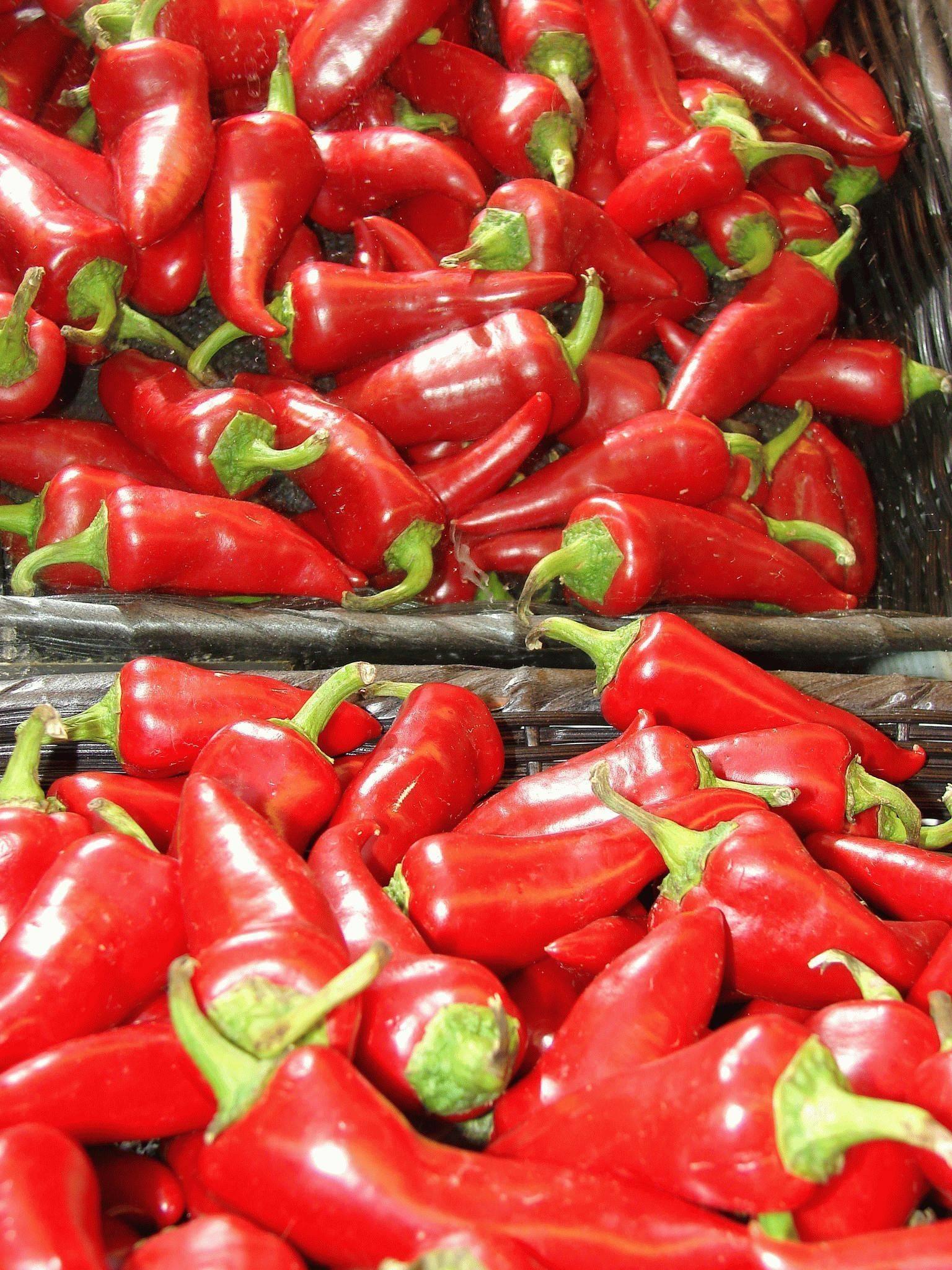 Сорта перцев для ленинградской области для теплиц - скороспел
