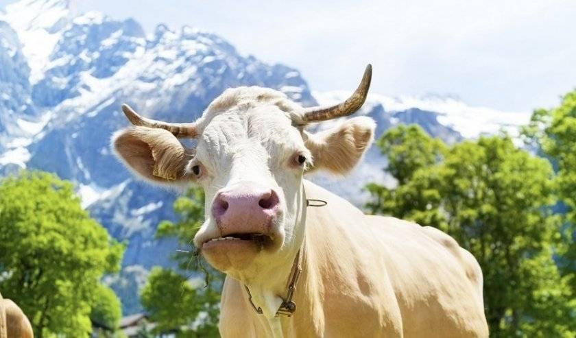 Здоровье крс: проглатывание пластмассы, обертки и шпагата может убить ваших животных — agroxxi