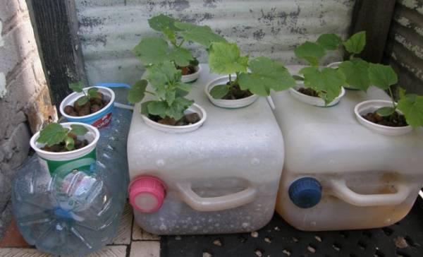 Гидропоника в домашних условиях – зелень своими руками: схема установки для квартиры и балкона