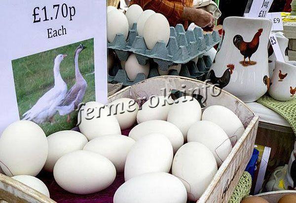Гусиные яйца: польза и вред, что можно сделать, сколько варить вкрутую