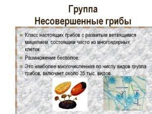 Грибы хищники: примеры, названия, представители