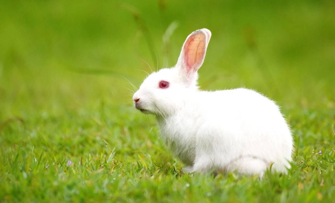 Интересные факты о кроликах для детей. 22 интересных факта о кроликах