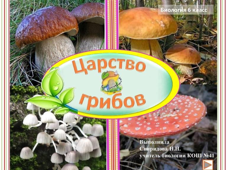 Будущее замицелием: как используют грибы встроительстве, дизайне имедицине