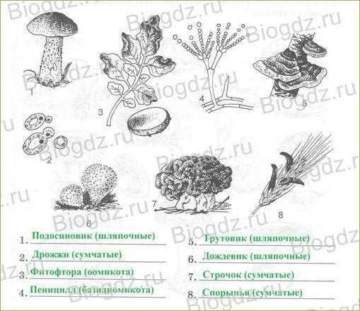 Царство грибов: строение, жизнедеятельность, размножение