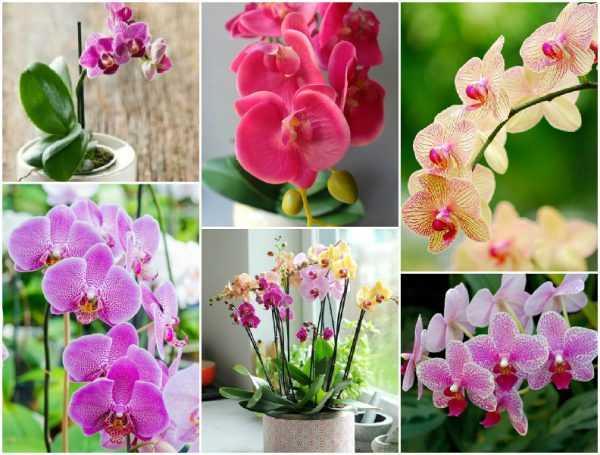 Топ самых необычных орхидей, включая редких представителей. описание и фото растений