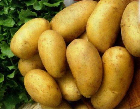 Картофель сказка: описание сорта, характеристика, фото русский фермер