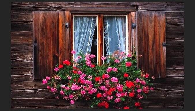 Комнатные цветы цветущие круглый год, фото и названия