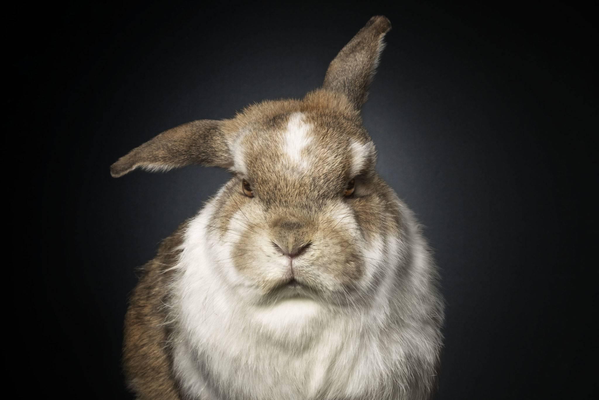 Как отучить кроликов кусаться