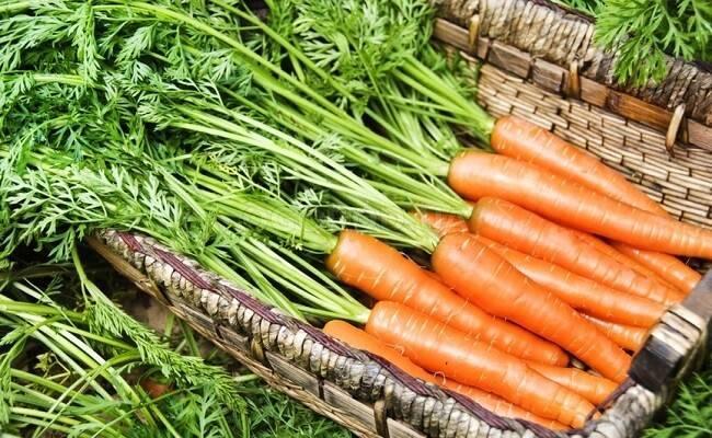Посадка моркови в открытый грунт весной: как и когда