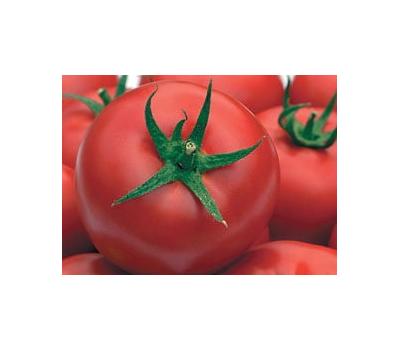 Томат львович f1: описание гибрида помидоров, отзывы о нем, преимущества и недостатки, пошаговая инструкция по выращиванию