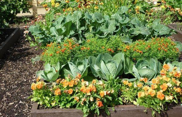 Планируем посадки: разберемся в совместимости растений и овощей