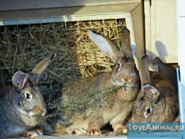 Как сделать сенник для кроликов: инструкция по постройке своими руками