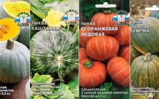 Зеленая тыква: свойства, сорта