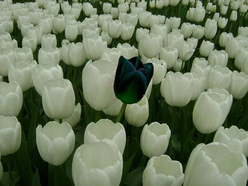 Сорта тюльпанов: топ-20 самых красивых разновидностей, описания и уход