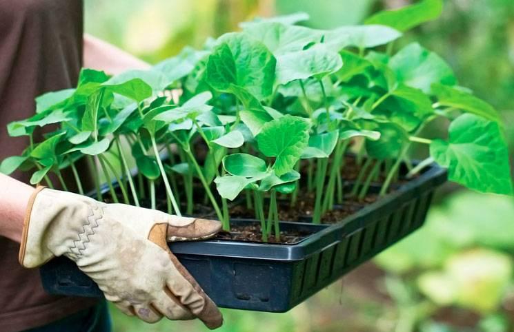 Как выбрать гумат калия и другие стимуляторы роста для комнатных растений, корней и цветов в домашних условиях - советы от лигногумат | москва