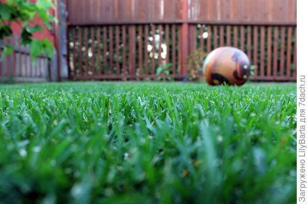 Все, что необходимо знать о газонной траве