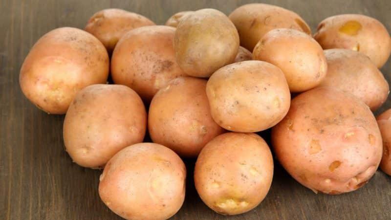 Картофель наташа: описание сорта, характеристики, достоинства, сроки и правила посадки, агротехника, отзывы