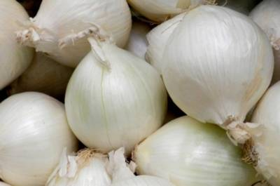 Лук стардаст: описание белого репчатого овоща, характеристика сорта, посадка севком и семенами, нюансы ухода