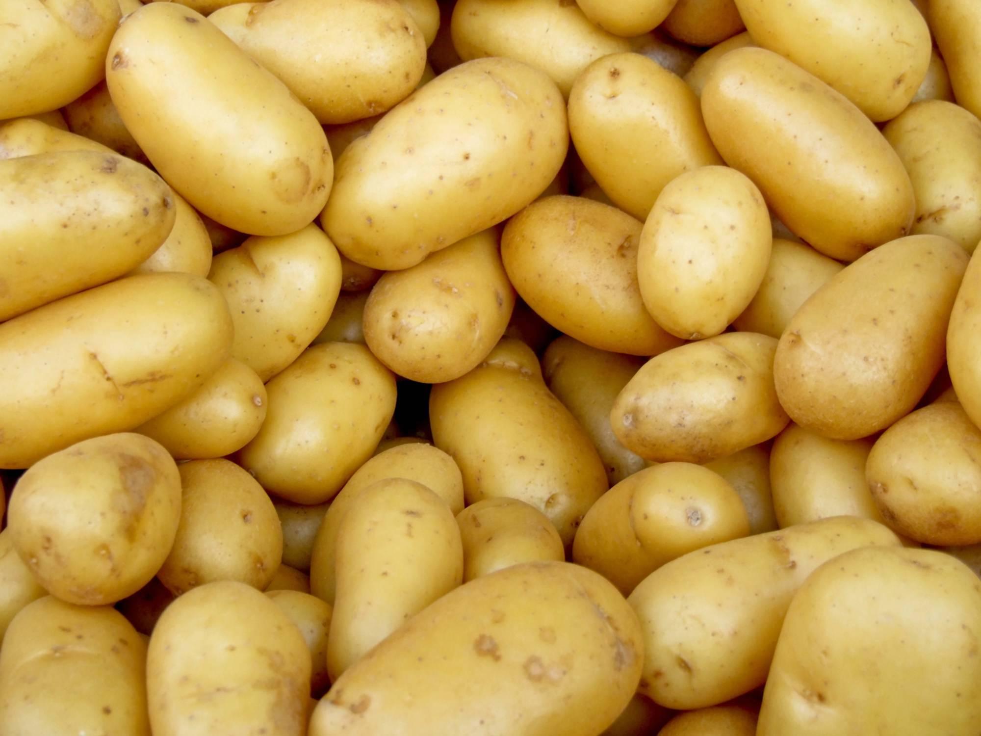 Парша картофеля — 5 способов уберечть урожай