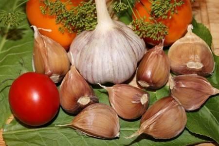 Озимый чеснок сорта кавалер: урожайный и зимостойкий