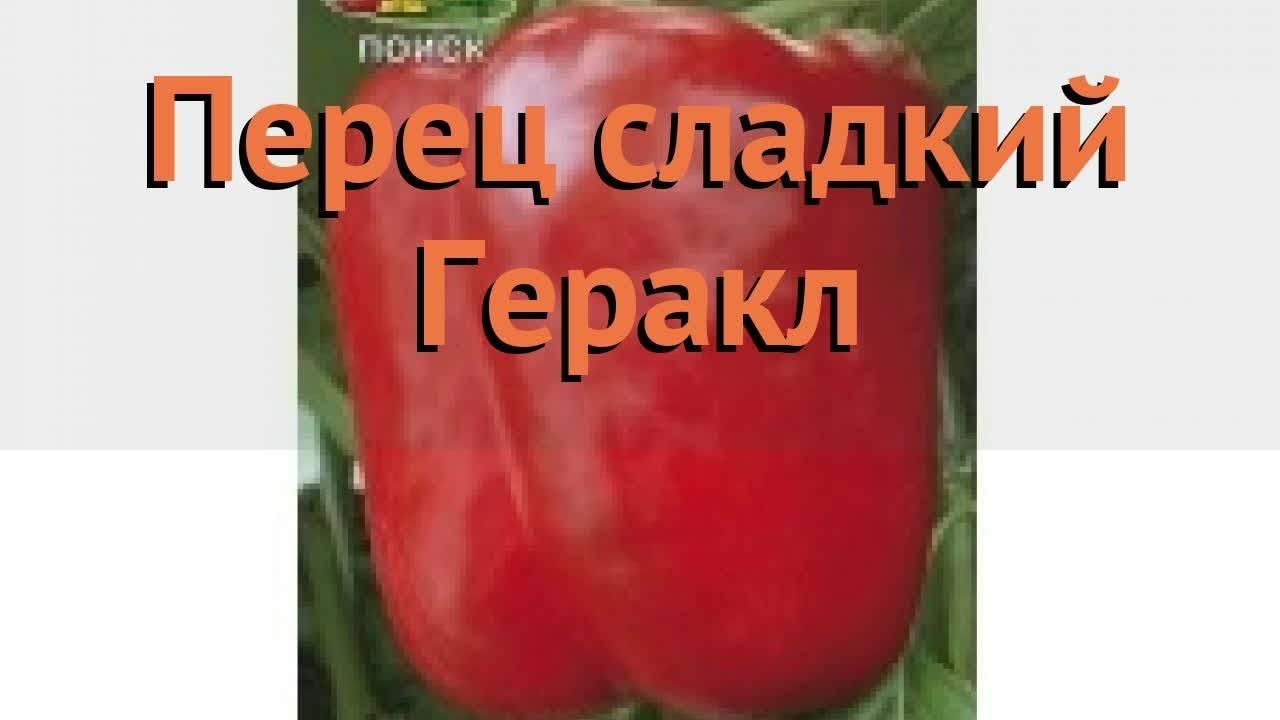 Лук геркулес: описание сорта, фото, отзывы, посадка и уход, достоинства и недостатки, урожайность, особенности выращивания