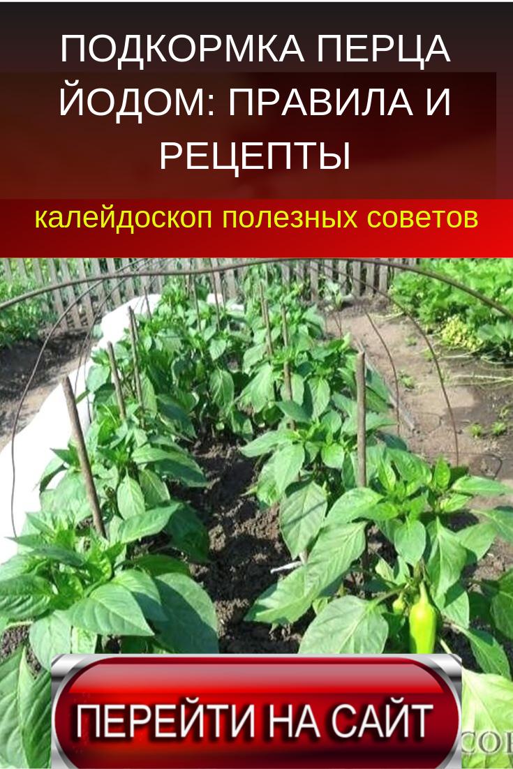 Йод для растений как удобрение для цветов, помидор и огурцов