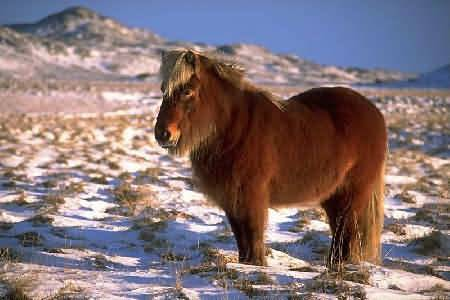 Лошади кладрубской породы: история, описание, особенности   мои лошадки