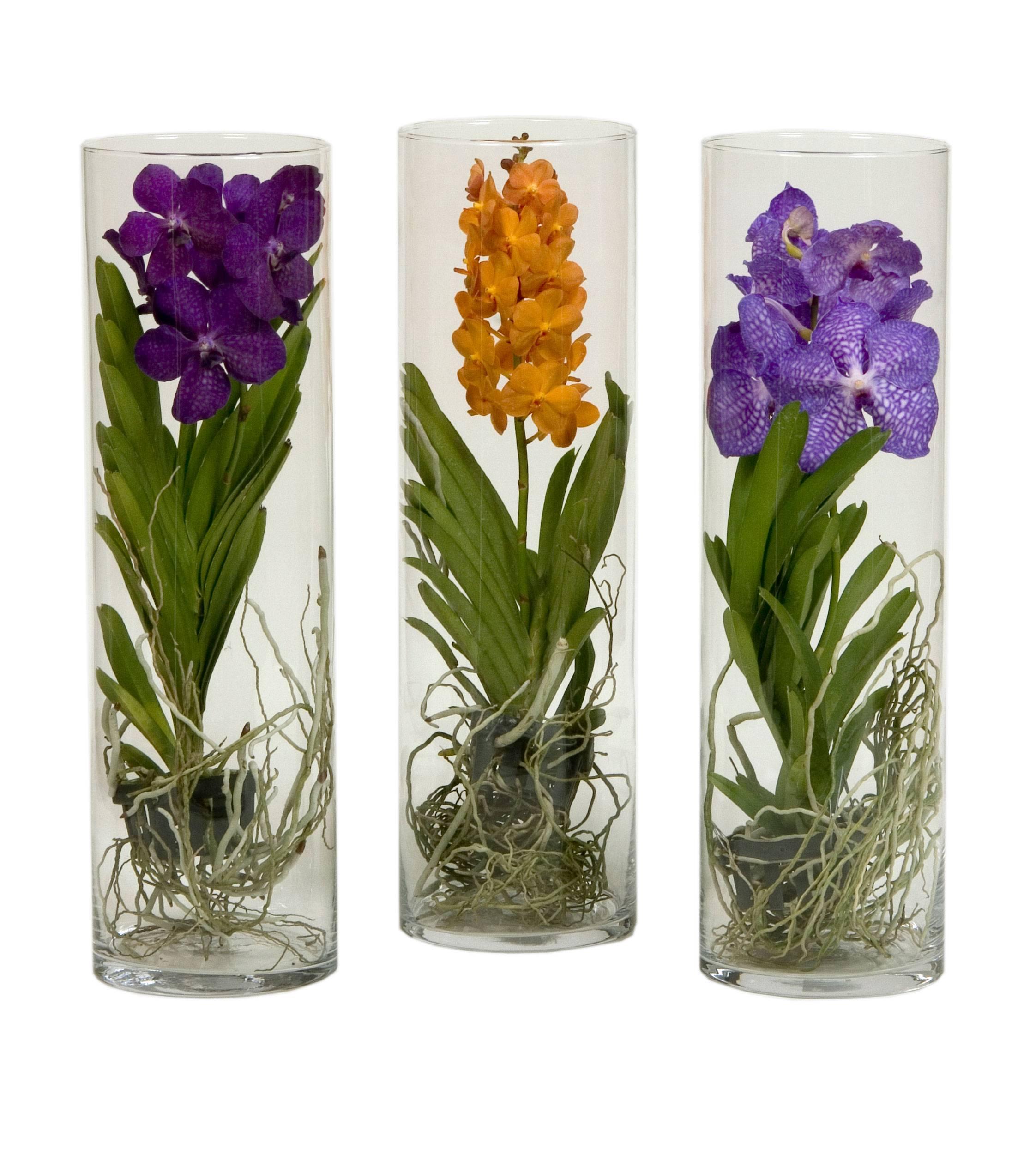 Добавляем изысканности в интерьер: орхидея в стеклянной вазе, колбе и других емкостях