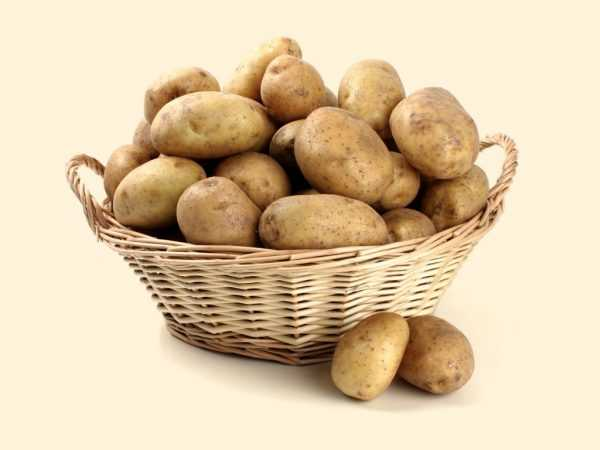 ᐉ сорт картофеля «триумф» – описание и фото - roza-zanoza.ru