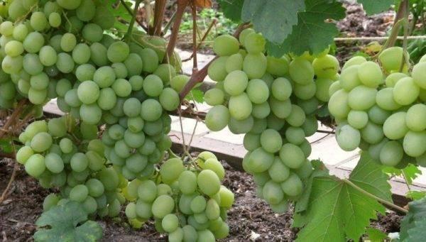 Самые необычные виноградники мира