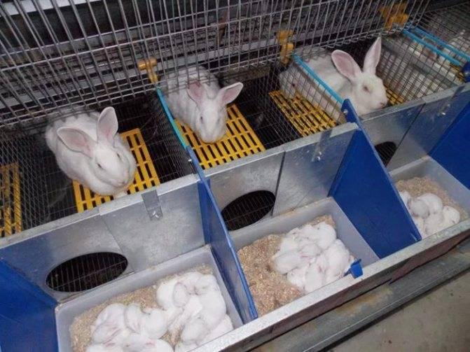 Как сделать клетки для кроликов своими руками?