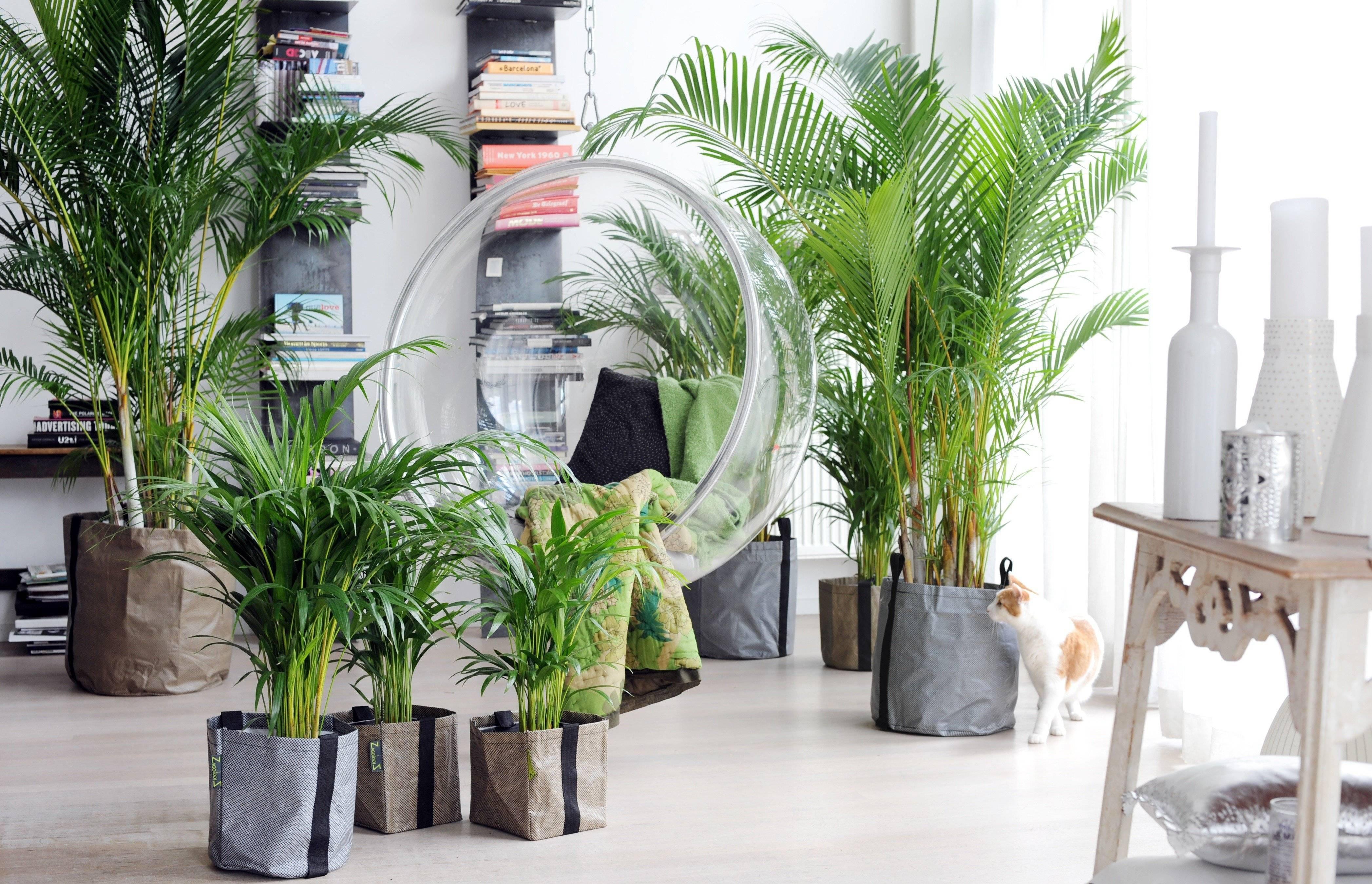 Декоративные пальмы для дома: разновидности, фото и названия