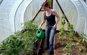 Как поливать огурцы в открытом грунте и теплице: важные правила и особенности