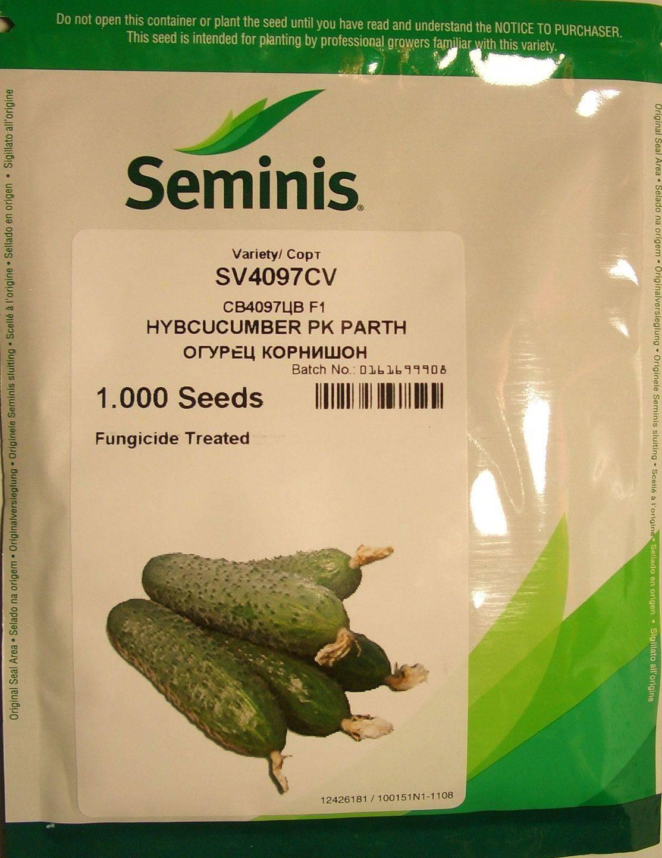 Огурец св 4097 цв f1: описание и урожайность сорта, фото, отзывы