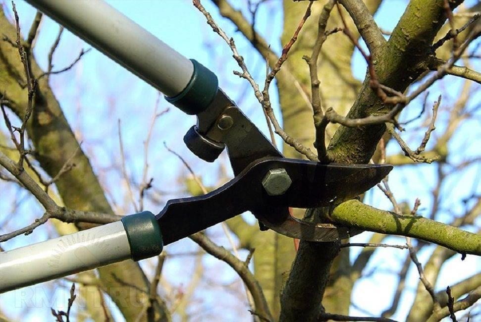 Обрезка молодой яблони осенью: схема и инструкция для начинающих в картинках пошагово, видео