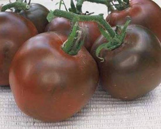 Томат черный принц - описание сорта, характеристика, урожайность, отзывы, фото