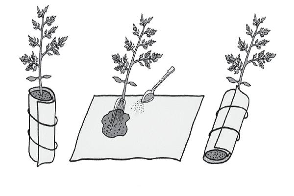 Как сажать томаты по методу кизимы