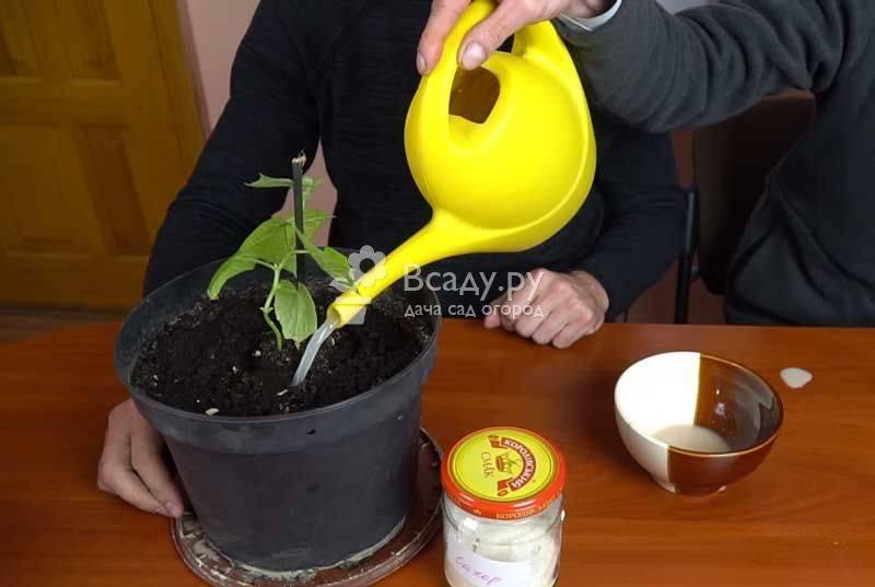 Подкормка дрожжами растений, как приготовить удобрение для огорода