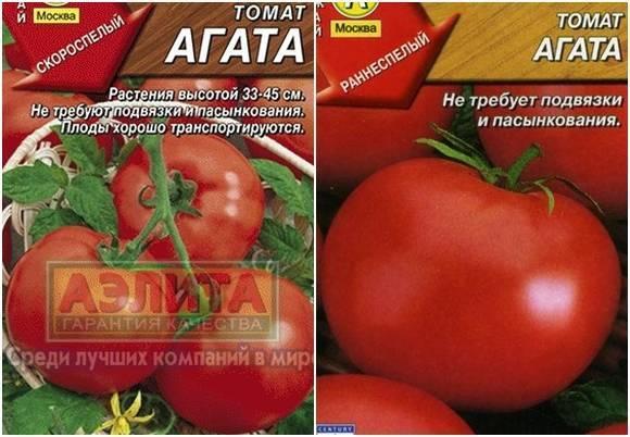 Томат агата: характеристика и описание сорта, отзывы садоводов с фото